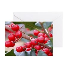 Holly Berries Holiday Christmas Card