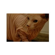 hairless sphynx cat Rectangle Magnet