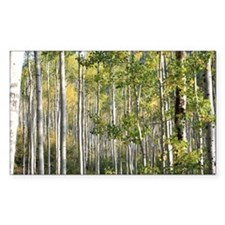 Aspen Forest Decal