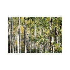 Aspen Forest Rectangle Magnet
