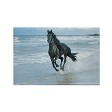 Black Arabian Horse-Beach Rectangle Magnet