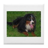 Lucky Dog Tile Coaster