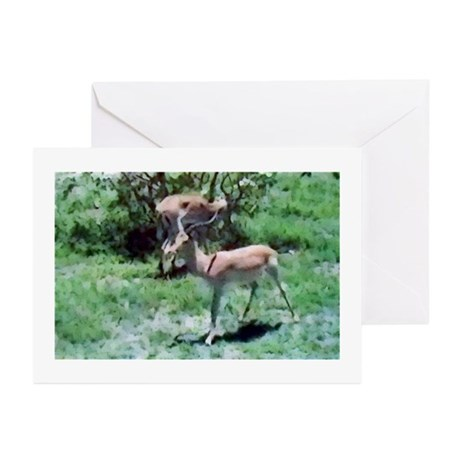 Gazelle Greeting Cards (Pk of 10)