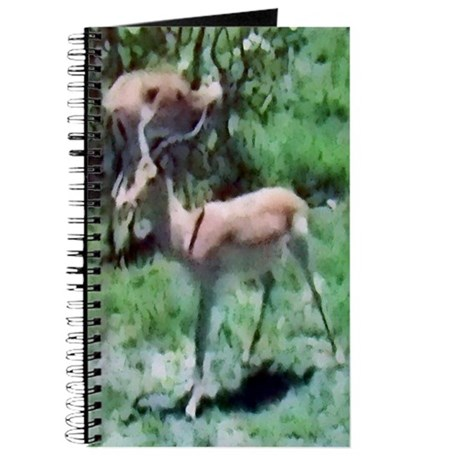 Gazelle Journal