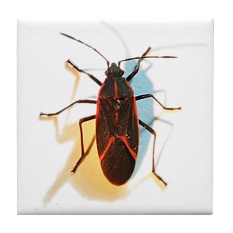 Boxelder Bug Tile Coaster
