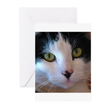 Cat Face Greeting Cards (Pk of 10)