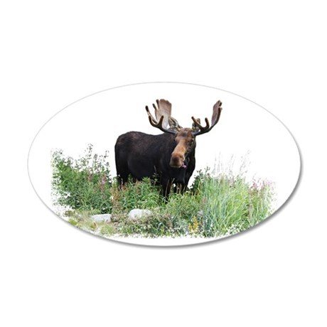 Moose Eating Flowers 20x12 Oval Wall Decal