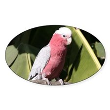 Rose Breasted Cockatoo Decal