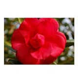 Camellia Postcards (Package of 8)