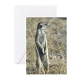 Unique Meerkat manor Greeting Cards (Pk of 10)