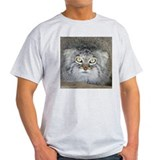 Pallas' Cat Ash Grey T-Shirt