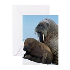 Walrus Greeting Cards (Pk of 10)