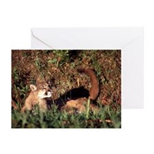 Cougar Greeting Cards (Pk of 10)