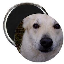 Buhunds Magnet