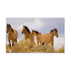 Buckskin Horses Rectangle Car Magnet