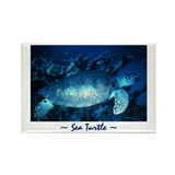 Swimming Sea Turtle :: Rectangle Magnet (10 pack)