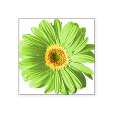 """pop-daisy_gr.png Square Sticker 3"""" x 3"""""""