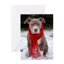 Winter Pit Bull Greeting Card