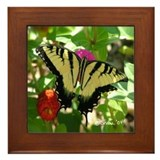 1581 Tiger Swallowtail Butterfly Framed Tile