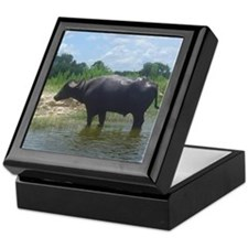 water buffalo Keepsake Box