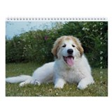 A Great Pyrenees III, Wall Calendar 2013