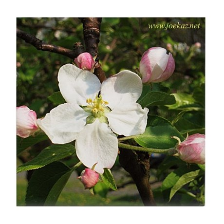 Apple Blossom Tile Coaster