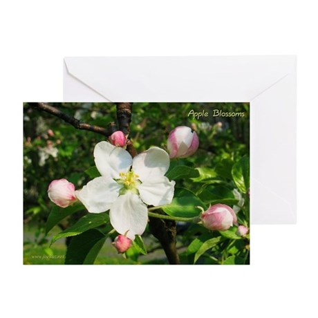 Apple Blossom Greeting Cards (6)