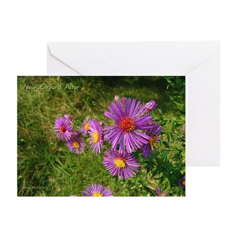 New England Aster Greeting Cards (6)
