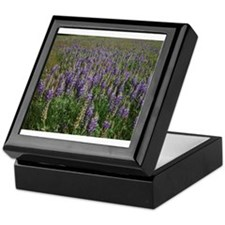 Field of Lupine Keepsake Box