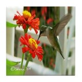 1998 Hummingbird Drinking From Zinnia Tile Coaster