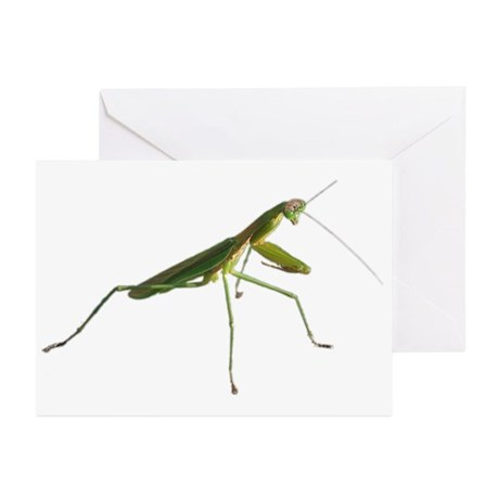 Praying Mantis Greeting Cards (6)