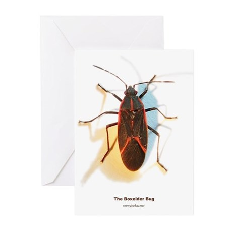Boxelder Bug Greeting Cards (Pk of 10)