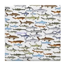 school of sharks 2f2 Tile Coaster