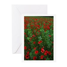 Poppy Field Greeting Cards (Pk of 10)