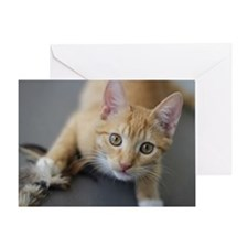 Yellow Tabby Kitten Birthday Greeting Card