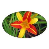 Petals of Yellow and Orange Oval Decal
