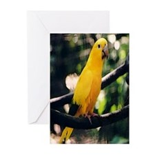 Golden Conure 2 Greeting Cards (Pk of 10)
