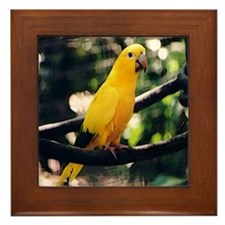 Golden Conure 2 Framed Tile