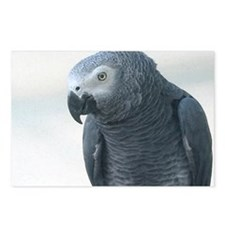 Grey Parrot Postcards (Package of 8)