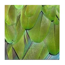 Military Macaw series 5 Tile Coaster