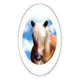 Palomino Pony Oval Decal