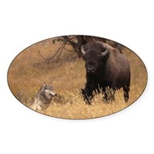 Bull Bison & Wolf Decal