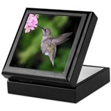 Anna's Hummingbird Keepsake Box