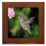 Anna's Hummingbird Framed Tile