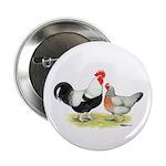 Dorking Chickens 2.25