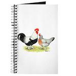 Dorking Chickens Journal