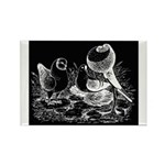 Etched Pigeon Trio Rectangle Magnet