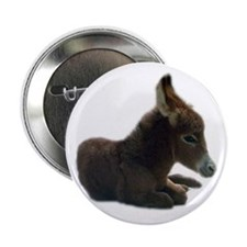 "donkey colt 2.25"" Button (10 pack)"