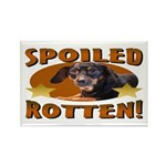 Spoiled Rotten Dachshund Rectangle Magnet