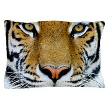 Tigers, Big Cat Football Pillow Case